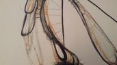 Closeups of TooMuch 001